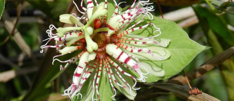 Destaque Amazônia - A descoberta de novas espécies. Leia.
