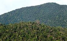 Doutorado em Botânica Tropical é aprovado pela Capes