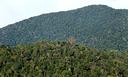 Doutorado em Botânica Tropical é aprovado pela Capes.png
