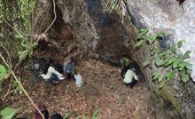 Em Carajás, estudos comprovam a origem antrópica da floresta amazônica