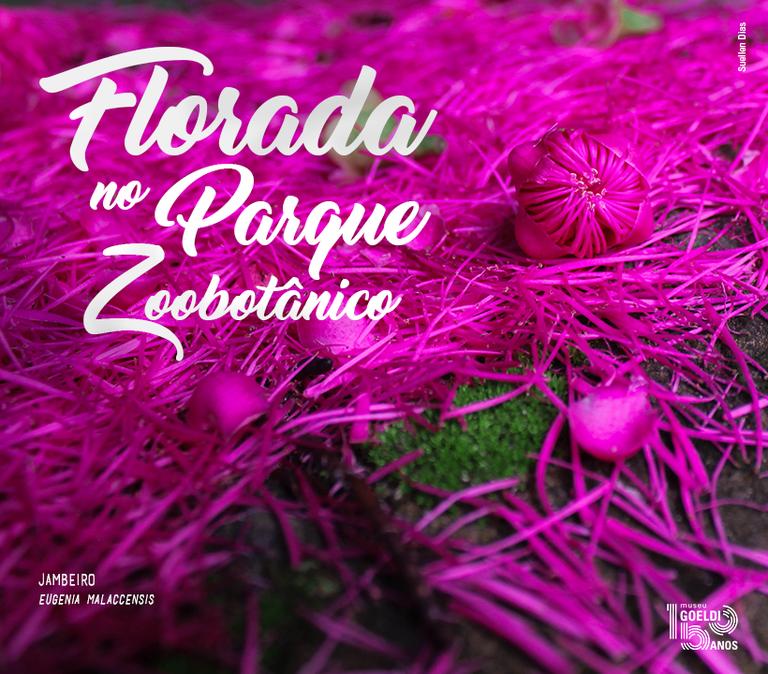 Cartão - Florada no MPEG -  Jambeiro.png