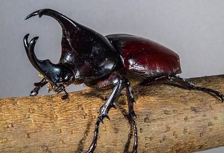 Coleoptera.jpg