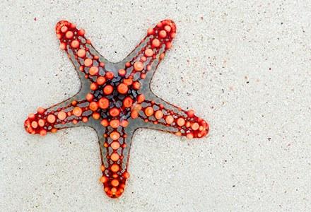 Echinodermata.jpg