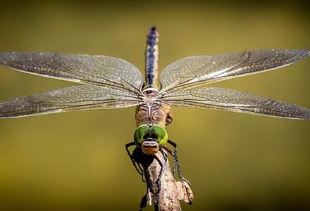 Entomologia.jpg
