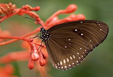 Lepidoptera.jpg