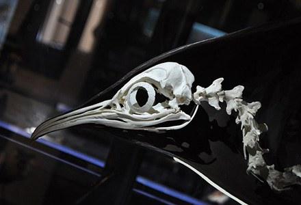 Osteologica.jpg