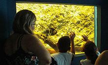 Celpa garante recursos financeiros para investir no mais antigo aquário público do Brasil e na melhoria da sinalização aos visitantes do Parque da instituição, um local privilegiado de educação científica