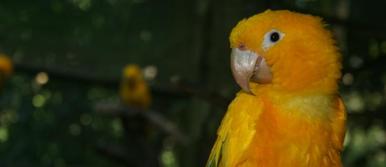 Nota técnica contesta PL que proíbe zoos, parques e aquários