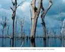 Reservatório da UHE de Balbina - Amazonas 2.jpg