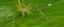 1º Simpósio de Artrópodes na Amazônia.png