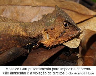 Mosaico Gurupi como forma de impedir a depredação ambiental