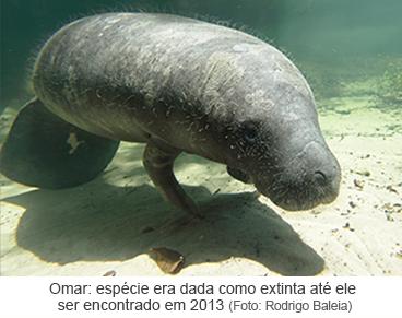 Omar: espécie era dada como extinta até ele ser encontrado em 2013