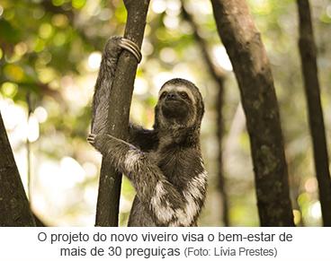 O projeto do novo viveiro visa o bem-estar de mais de 30 preguiças
