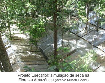 Projeto Esecaflor - simulação de seca na Floresta Amazônica