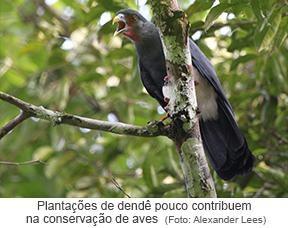 Plantações de dendê pouco contribuem para a conservação das aves.