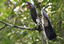 Plantações de dendê pouco contribuem para a conservação das aves.png