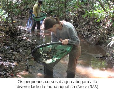 Os pequenos cursos d'água abrigam alta diversidade da fauna aquática