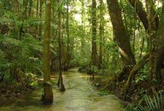 Estudo apontou a fragilidade da legislação brasileira na proteção dos igarapés