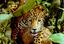 dia 3 - A pesquisa em unidades de conservação na Amazônia Oriental 1.png