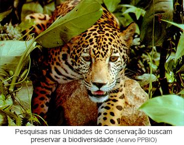 Pesquisas nas Unidades de Conservação buscam preservar a biodiversidade