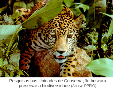 Pesquisas nas Unidades de Conservação buscam preservar a biodiversidade.png