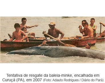 Baleia à vista.png