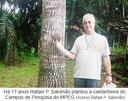 Há 17 anos Rafael P. Salomão plantou a castanheira do Campus de Pesquisa do MPEG