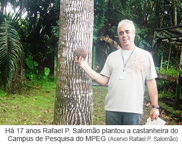 Há 17 anos Rafael P. Salomão plantou a castanheira do Campus de Pesquisa do MPEG.png