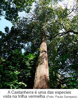 A castanheira é uma das espécies vista na trilha vermelha