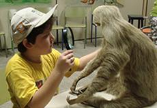 Na imagem, garoto integrante do Clube do Pesquisador Mirim observa com uma lupa um exemplar de preguiça taxidermizado