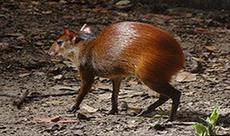 Cutia, a pequena notável do Parque Zoobotânico - Série Viva a Fauna Livre