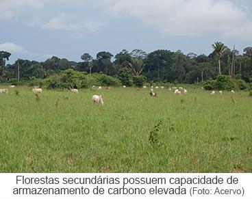 dia 17 - estudo climatico florestas secundárias