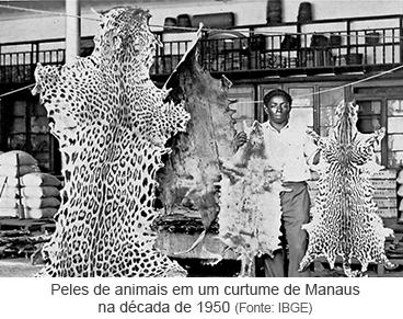 Peles de animais em curtume de Manaus na década de 1950