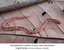 Xenopholis scalaris é uma das serpentes registradas