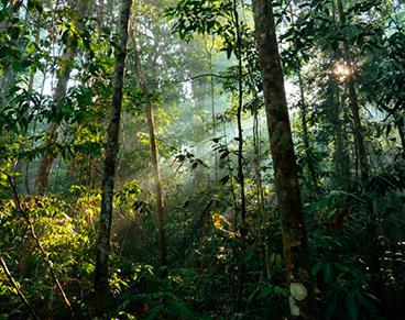 Floresta alterada na Amazônia brasileira.png