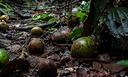 Florestas alteradas e dispersão de sementes.png