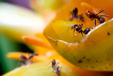 dia 12 - Formigas e mudanças climáticas em discussão no Museu Goeldi.png