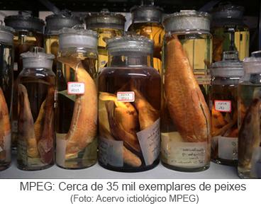 mpeg: cerca do 35 mil exemplares de peixes