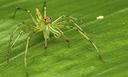 Simpósio de Artrópodes na Amazônia.png