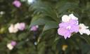 Inscrições abertas para seleção de Doutorado em Botânica Tropical.png