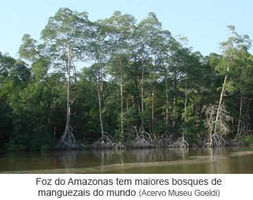 Foz do Amazonas tem maiores bosques de manguezais do mundo