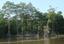 Foz do Amazonas tem maiores bosques de manguezais do mundo - imagem miniatura.png
