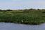 Livro discute a biodiversidade da Amazônia e do Pantanal.png