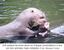 Erê estava há nove anos no Parque Zoobotânico e era um dos animais mais visitados