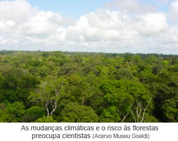 As mudanças climáticas e o risco às florestas preocupa cientistas