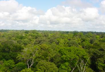 Miniatura - As mudanças climáticas e o risco às florestas preocupa cientistas.png