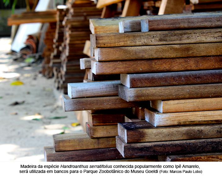 Museu Goeldi recebe doação de madeira do Ibama.jpg