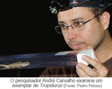 O pesquisador André Carvalho examina um exemplar de Tropidurus