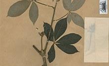 Herbario - Miniatura.jpg