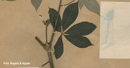 herbario - Modelo Notícia.jpg
